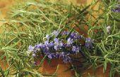 Landscaping planten voor Zuid-Texas