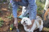 Houden van honden uit bloemperken