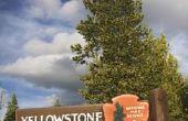 Een bezoek aan Yellowstone Nationaalpark in het midden van augustus