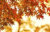 Hoe herken ik het verschil tussen Hard esdoorn & Soft Maple bomen