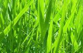 Wat doet de meststof met gras?