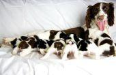 Schudden Puppy syndroom