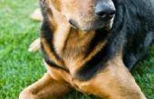 Wat voor soort Lotion of crème kan ik gebruiken op mijn hond om te voorkomen jeuk?