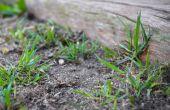 Hoe te stoppen met gras & onkruid groeien dicht bij een hek