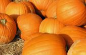 Leuk Fundraiser ideeën voor een basisschool Fall Festival