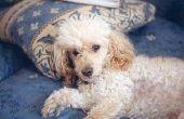 How to Make a Dog's krullend haar rechte