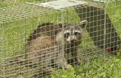 Hoe word ik een overlast dieren in het wild controle exploitant in Pennsylvania