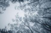 Het gebruik van de Bissell stoom Mop met Eucalyptus-Mint