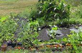 Hoe Plant een gemakkelijk te telen groente tuin
