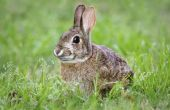 Eet konijnen aardbeiplanten?