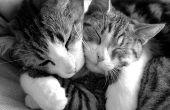 Kauwtabletten vlo controle voor katten