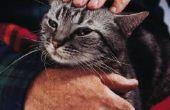 Hoe om te achterhalen wat voor soort Kitten ik heb