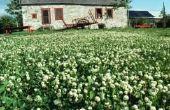Herbicide dat klaver niet zal doden