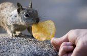 Hoe te houden van eekhoorns uit vuilnisbakken