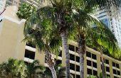 Hoeveel een CNA betaald in Florida?