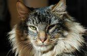 Maag medicatie voor katten