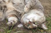 Waarom katten rond rollen na de paring?