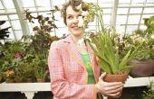 Hoe te te verfraaien een Terra cotta Flower Pot met lint