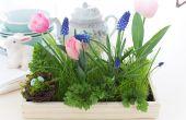 Een mooie Living gras middelpunt voor Pasen maken