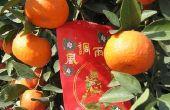 How to Grow een Mandarijn oranje boom in een Pot