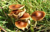 Hoe te identificeren van Nieuw-Zeeland bos paddestoelen