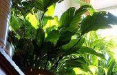 Welk Effect heeft gedestilleerd Water hebben op planten?