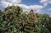 Biologische behandeling voor Cedar Apple roest