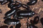 Kakkerlakken in geheugeneenheden