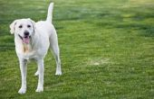 Hoe te neutraliseren hond afval in de bodem