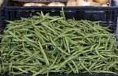Een lijst van Bush geteelde groenten
