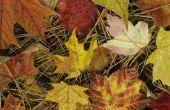 Planten & bomen die drie bladeren hebben