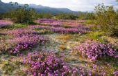 Lijst van zomerbloemen