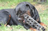 Phenobarb voor hond angst