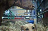 Hoof en Mouth Disease in honden