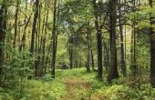Hoe Schakel bomen kooldioxide in zuurstof?