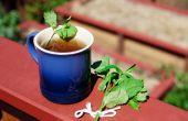 Hoe te drogen muntblaadjes voor thee