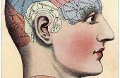 Hoe maak je een Model hersenen uit papier Mache