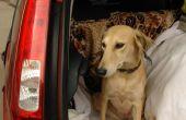 Reisziekte medicijnen voor honden