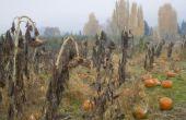De tekenen van herfst en najaar