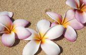 Hoe maak je Plumeria Foam bloemen