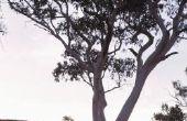 Bomen die Menthol ruikt