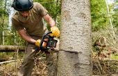 Hoe Open je een boom-Cutting-Service