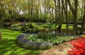 Welke planten absorberen overtollig Water in een tuin?