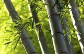 Hoe doorgeven van bamboe van stekken