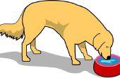 Hoe te meten voor een verhoogde Dog Bowl