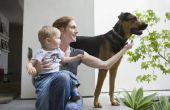 Advies voor een hond grommend op een Baby