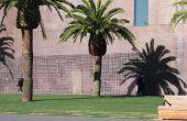 Hoe om de huid van een palmboom