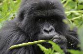Welke soorten dieren in het tropisch regenwoud zijn herbivoren?