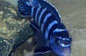 Het verhogen van de pH in een vis Aquarium