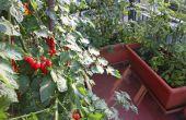 How to Grow een balkon tuin